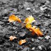 Autumn_in_Oils.jpg