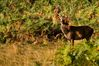 richmond_park_deers-6260.jpg