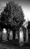Cemetery_Graves.jpg