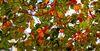 Leaves___Cropped_-Golden~1.jpg