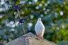 Top_Birds_IMG_5205.jpg