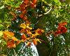 Autumn_red_and_gold_cr_res.jpg