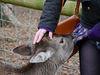 Deer_Sarah_corr_res.jpg