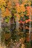 autumn_reflections.jpg