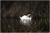 Lower_Moor_Farm_Swan_1024.jpg