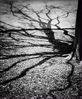058 Reflections_tree branches pinhole ecopy.jpg