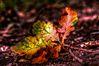 Autumn_up.jpg