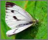 DSC_8208_Large_White.jpg
