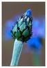 Flower~0.jpg