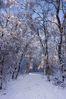 snow-1621.jpg